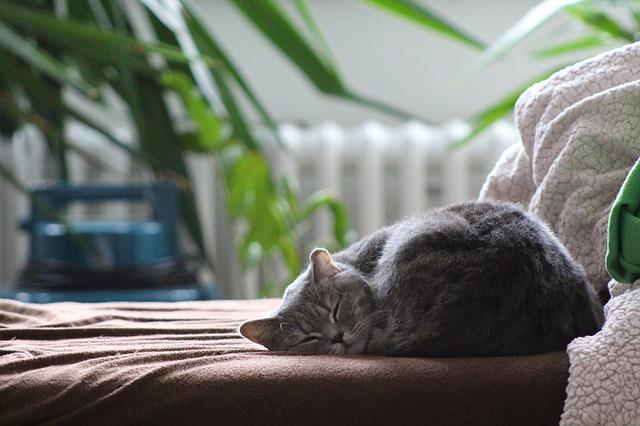 kot śpi w mieszkaniu